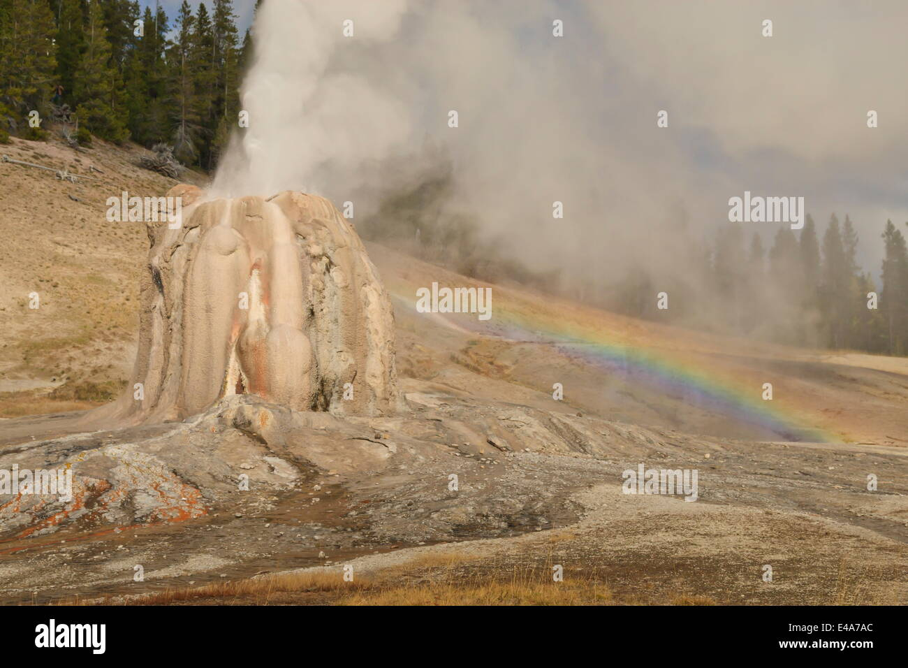 Lone Star Geyser erupts and creates rainbow, Yellowstone National Park, UNESCO, Wyoming, USA - Stock Image