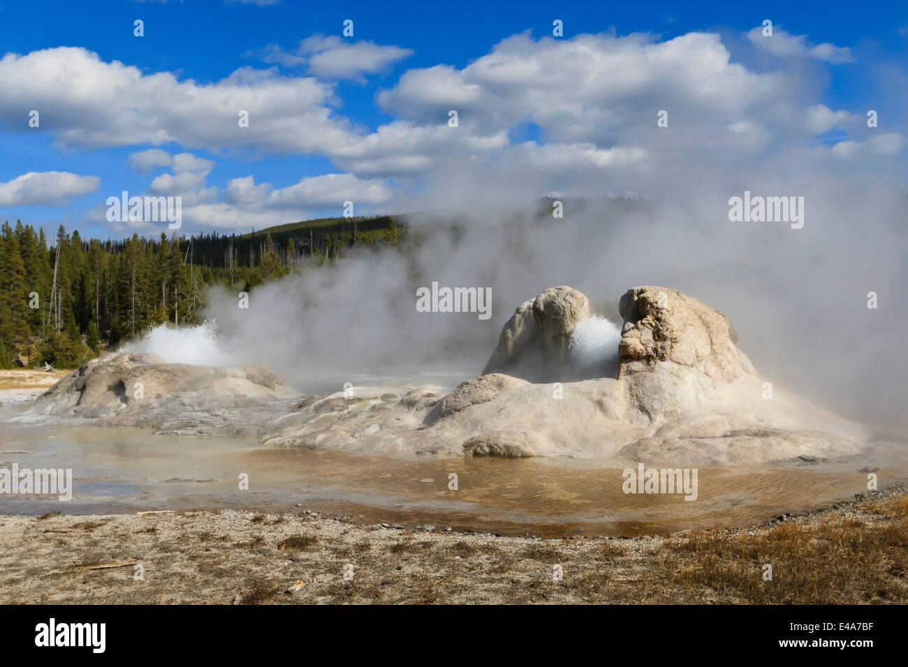 Rocket and Grotto cone geysers erupt, Upper Geyser Basin, Yellowstone National Park, UNESCO, Wyoming, USA - Stock Image