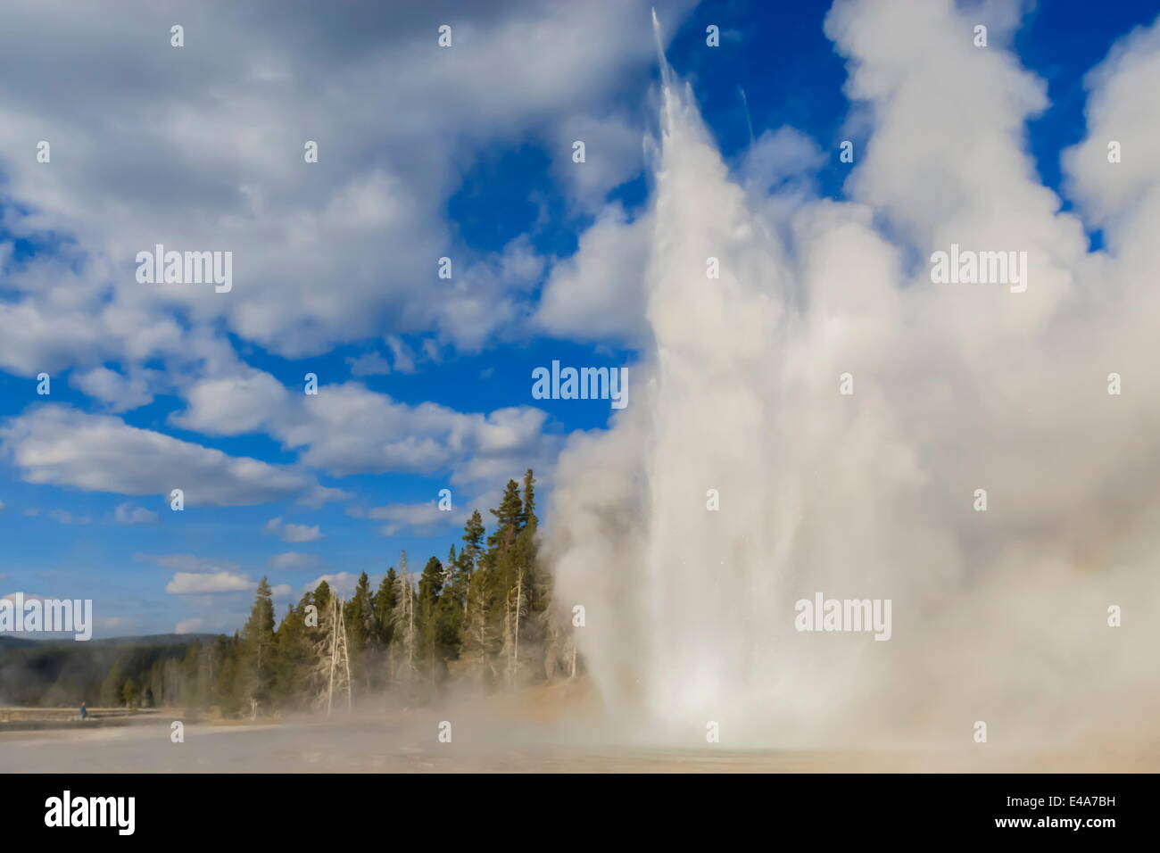 Lone observer watches Grand Geyser erupt, Upper Geyser Basin, Yellowstone National Park, UNESCO, Wyoming, USA - Stock Image