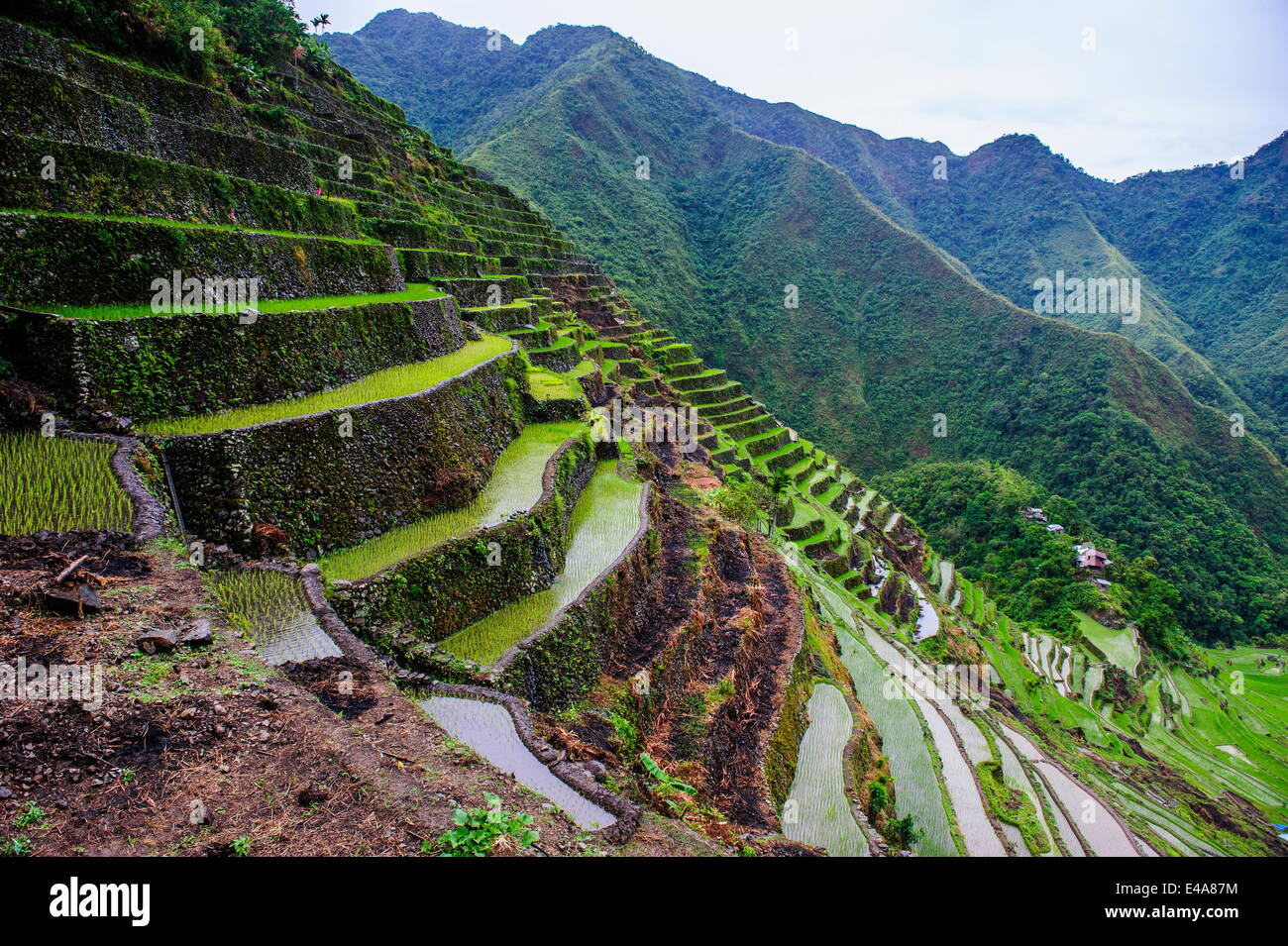 Batad rice terraces, part of the UNESCO World Heritage Site of Banaue, Luzon, Philippines, Southeast Asia, Asia - Stock Image