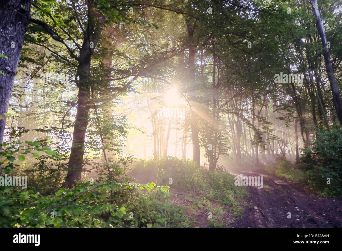 Germany, North Rhine-Westphalia, Forest, Morning mist and sunrise Stock Photo