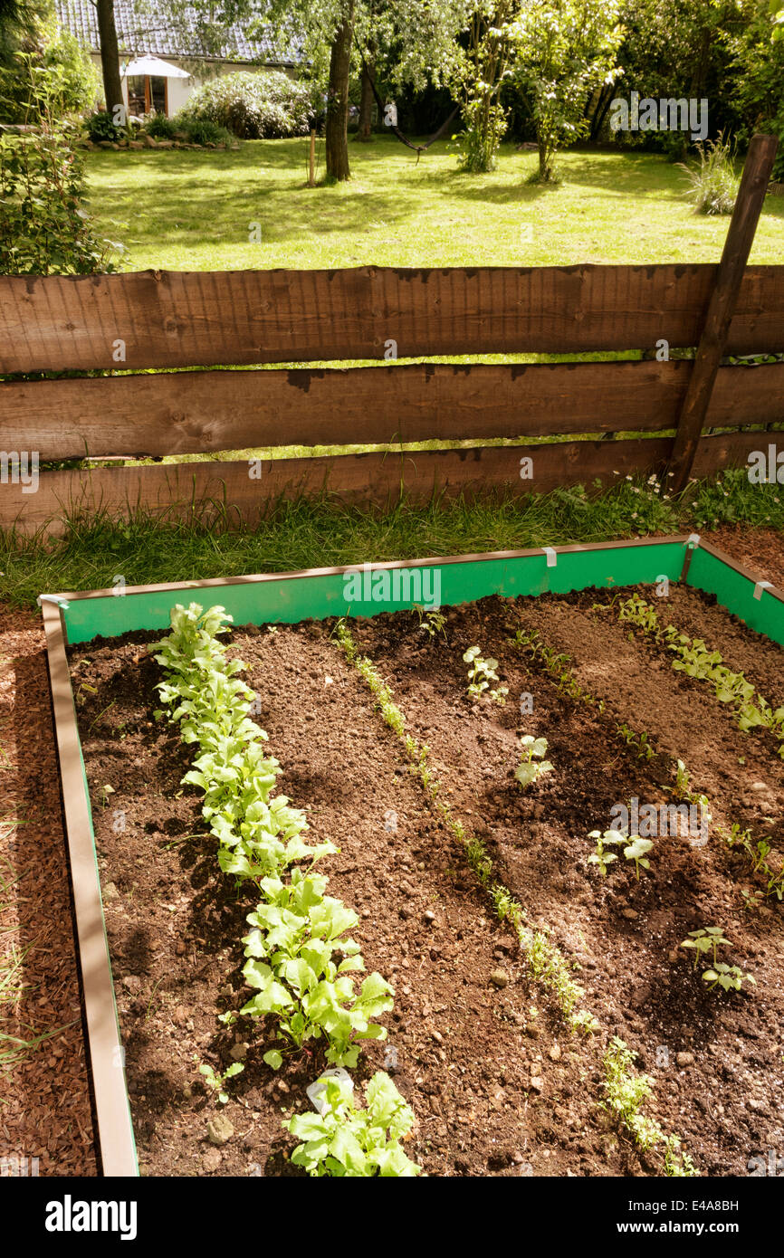 Garden with mixed vegetable patch and slug fence Stock Photo ...
