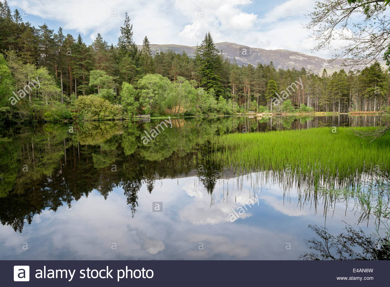 Picturesque Glencoe Lochan and woodland created by Lord Strathcona for Canadian wife. Glencoe Highland Scotland - Stock Image
