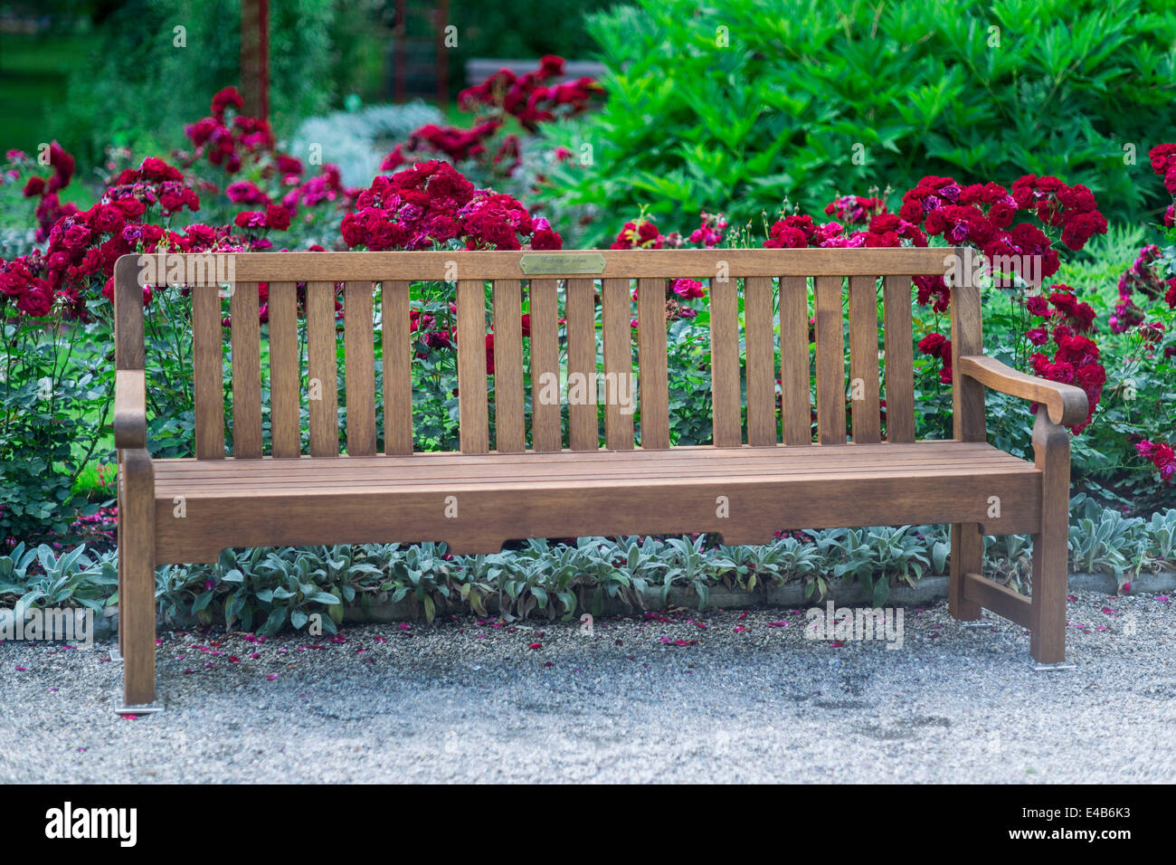 Park bench in blooming roses - Stock Image
