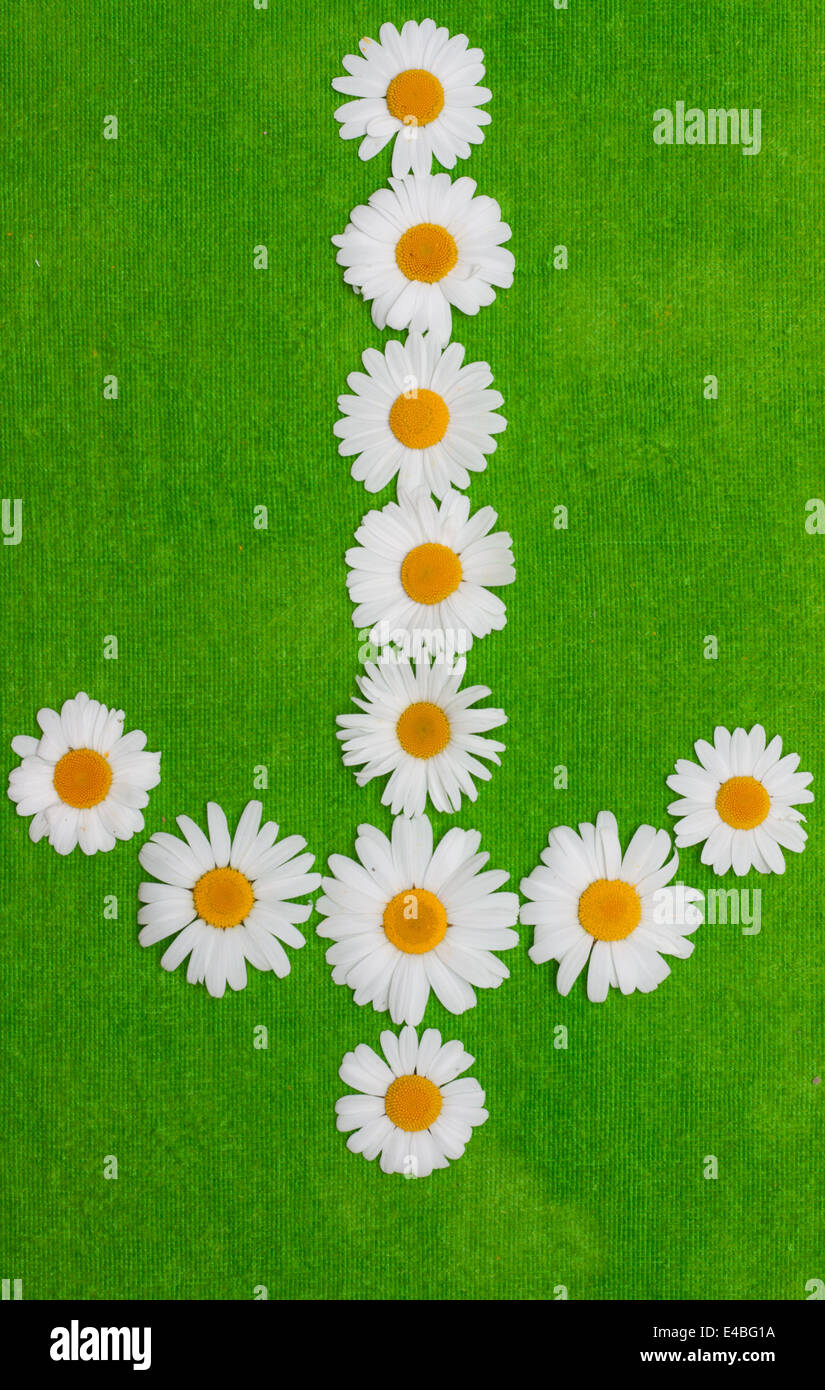 Daisywheels in the manner of arrows - Stock Image