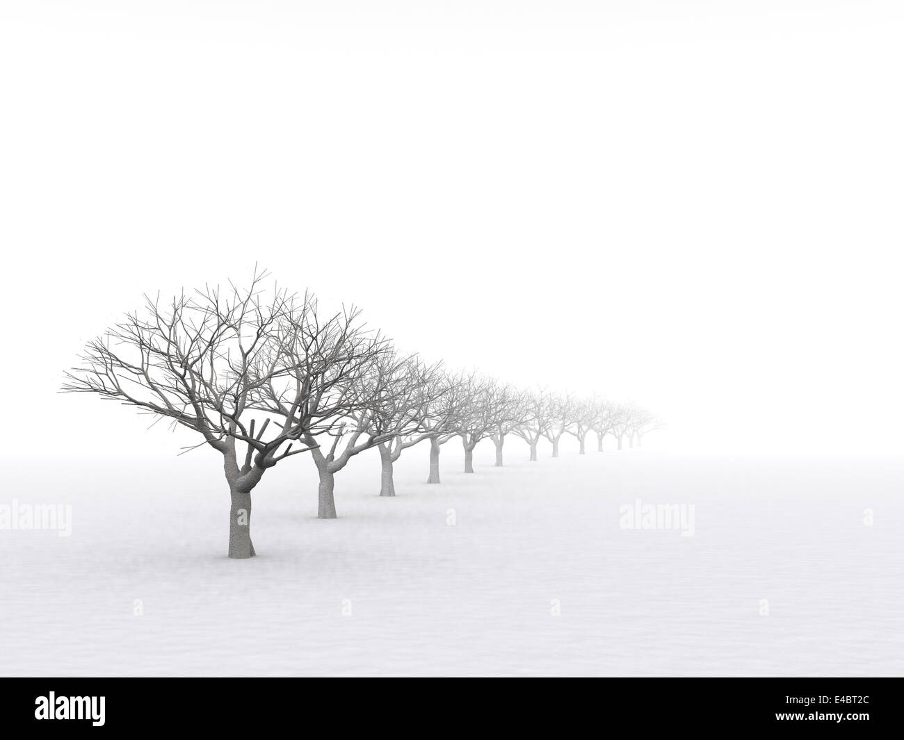 trees in misty haze in a gloomy winter day - Stock Image