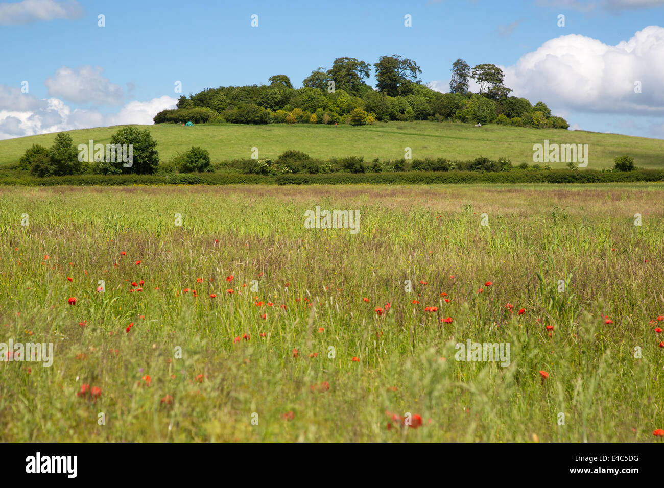Wittenham Clumps, The Earth, Trust Oxfordshire - Stock Image