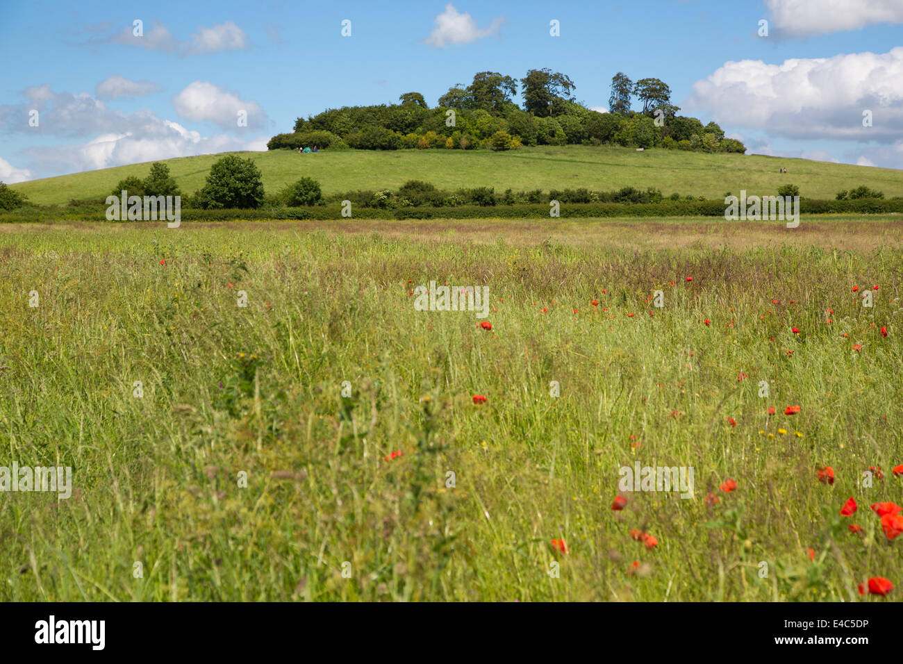 Wittenham Clumps, Oxfordshire UK - Stock Image