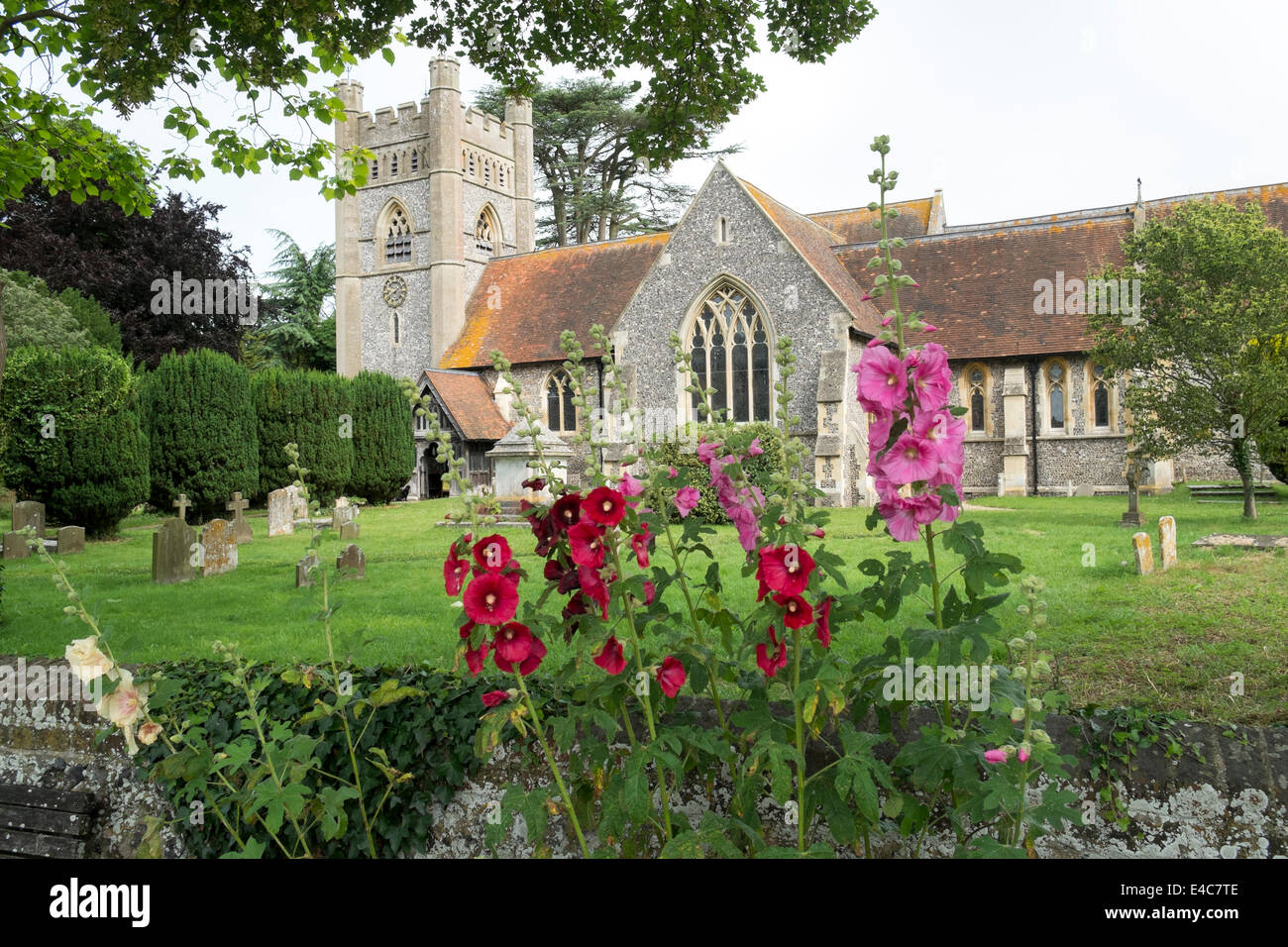Hollyhocks growing in front of St Mary the Virgin parish church Hambleden village Buckinghamshire Bucks UK - Stock Image