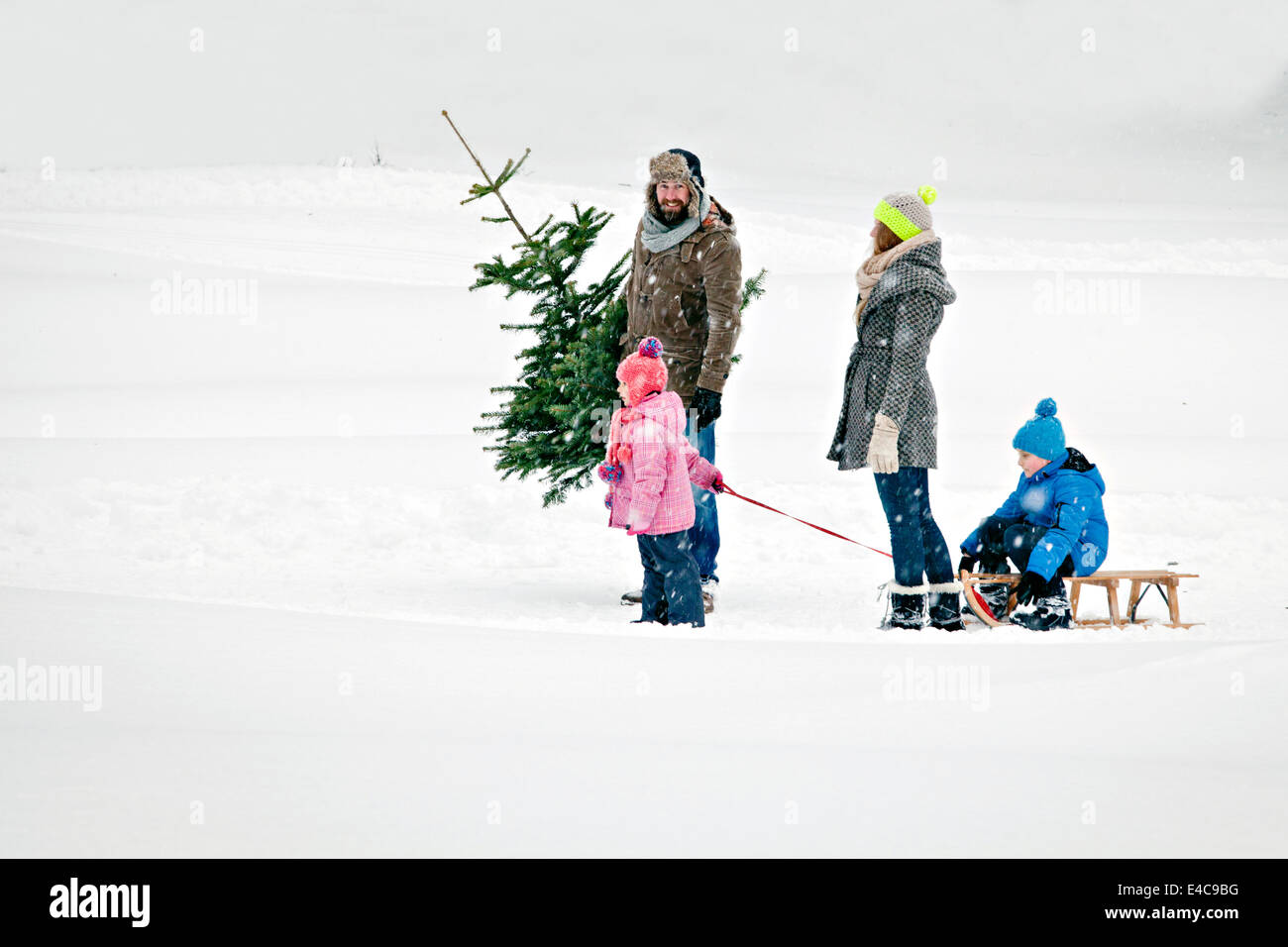 Family with two children carries Christmas tree in snow-covered landscape, Bavaria, Germany - Stock Image