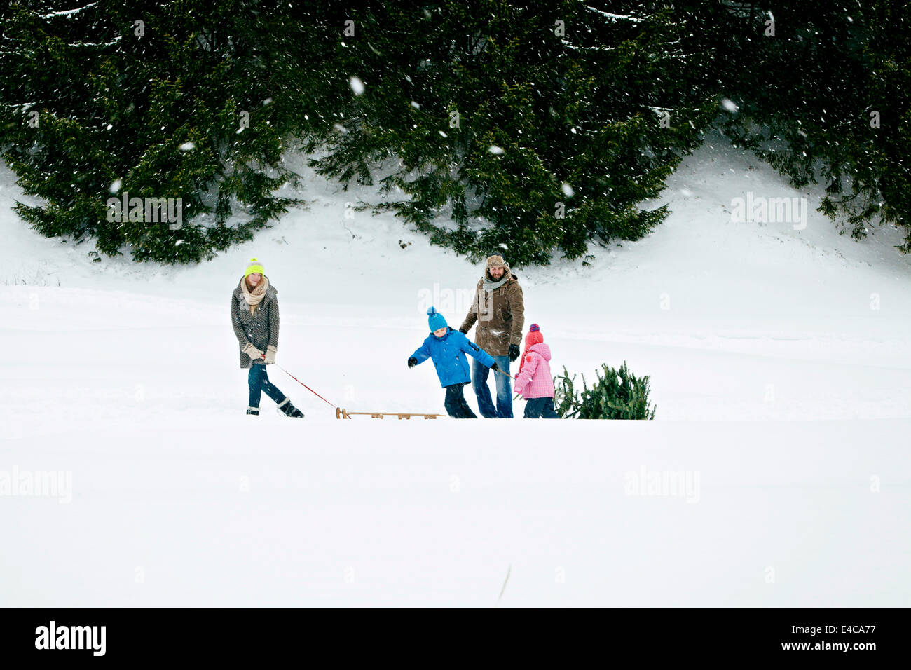 Family with two children pulls Christmas tree in snow-covered landscape, Bavaria, Germany - Stock Image