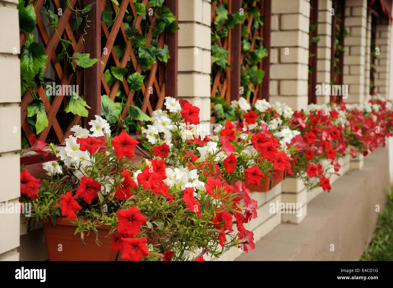 The facade is decorated with petunias - Stock Image