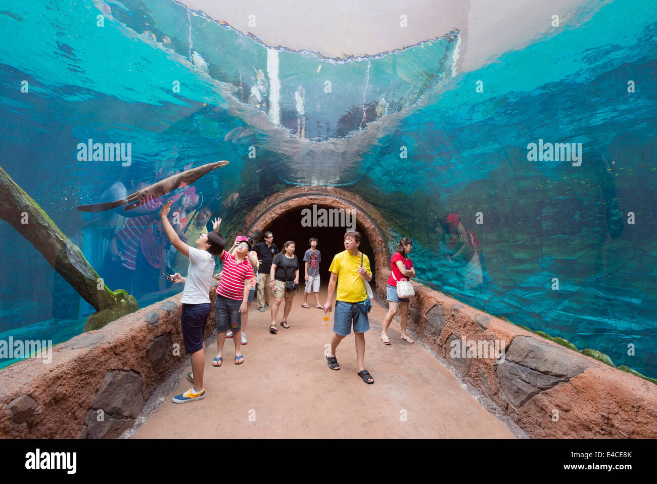 how to go to singapore zoo