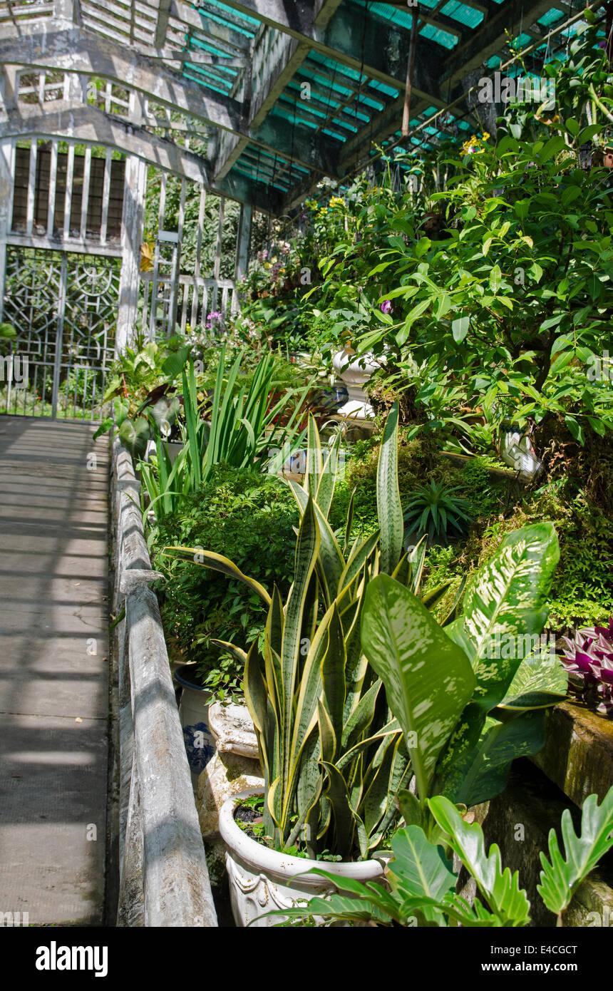 Green house in the Saigon zoo & botonical garden, Thao Cam Park, Ho Chi Minh City, Vietnam - Stock Image