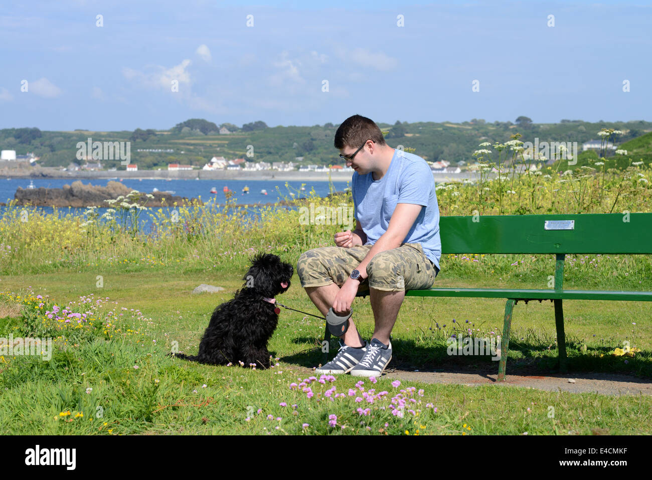 Man sat on bench with Cockapoo dog - Stock Image