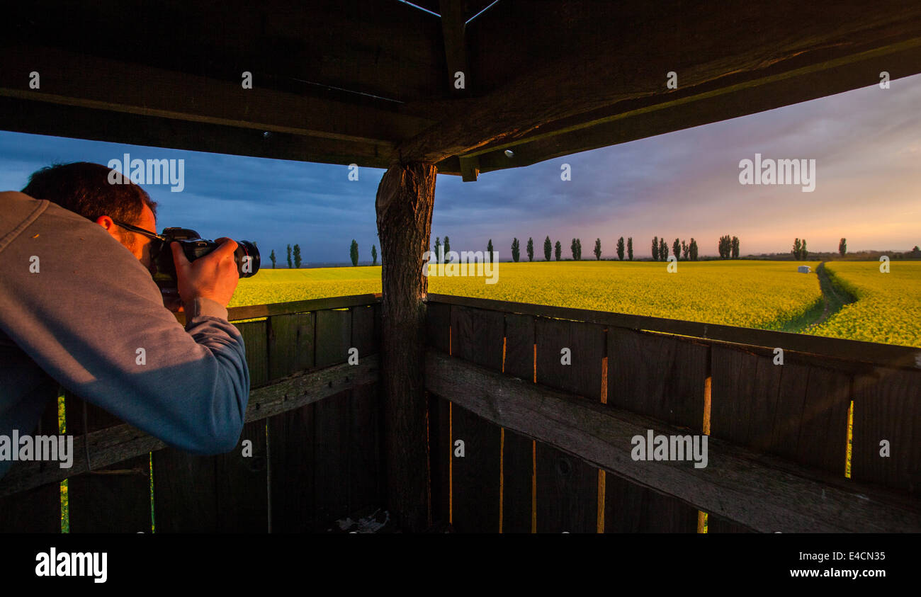 Man on lookout tower taking picture of colza field, Tuscany, Italy - Stock Image