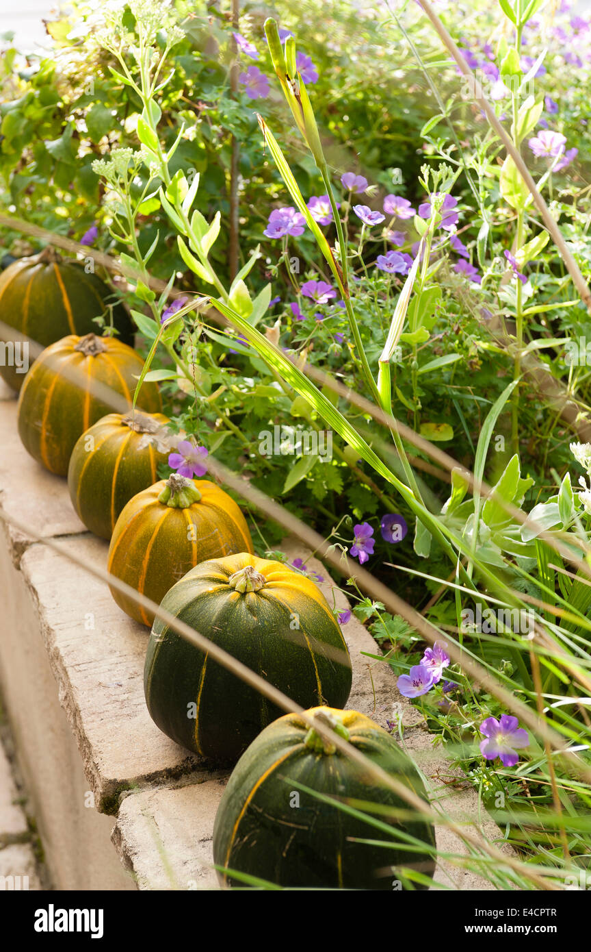 Row of pumpkins lined up on a terrace wall - Stock Image