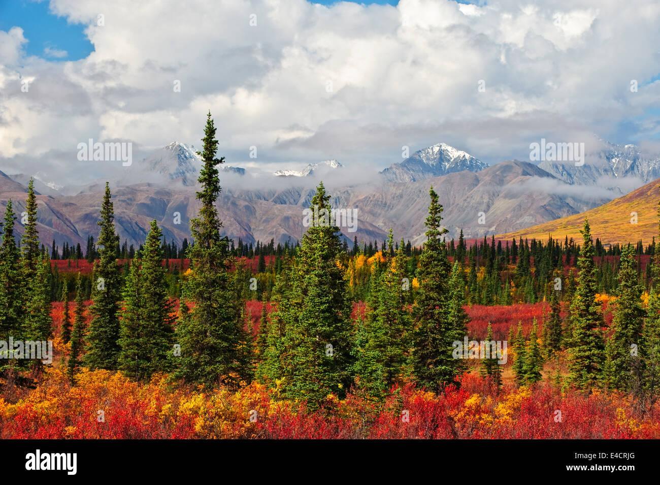 Fall color and the Alaskan range outside of Denali National Park, Alaska. - Stock Image