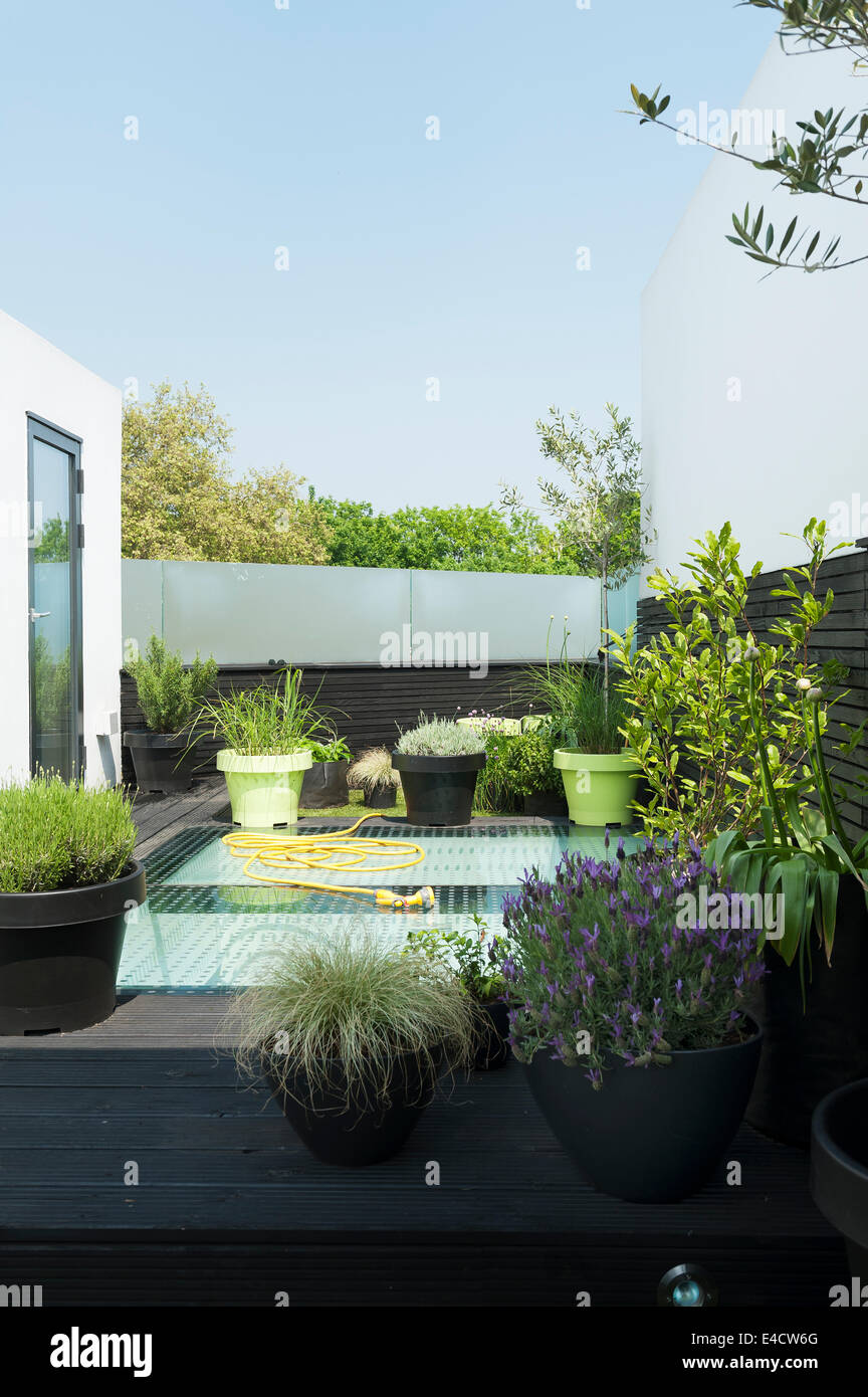 Potted plants on modern roof terrace - Stock Image