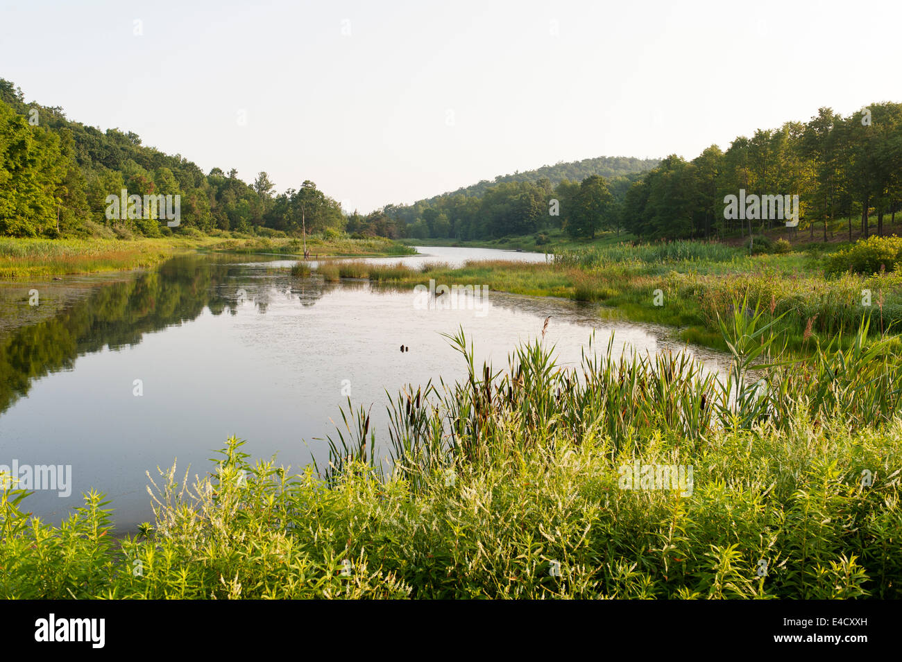 Large pond and woodland in upstate New York - Stock Image