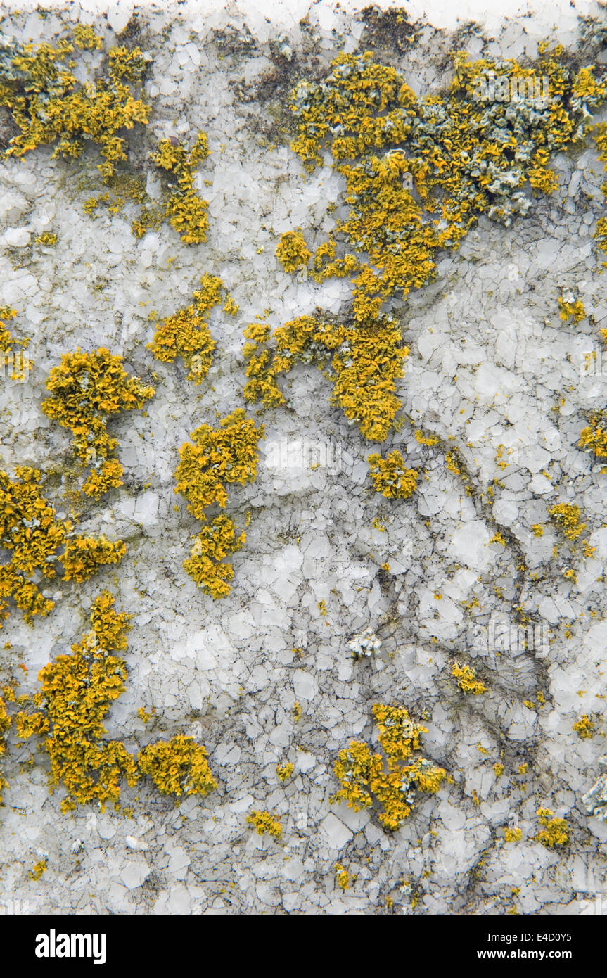 Detail of Lichen Growing on Gravestone - Stock Image