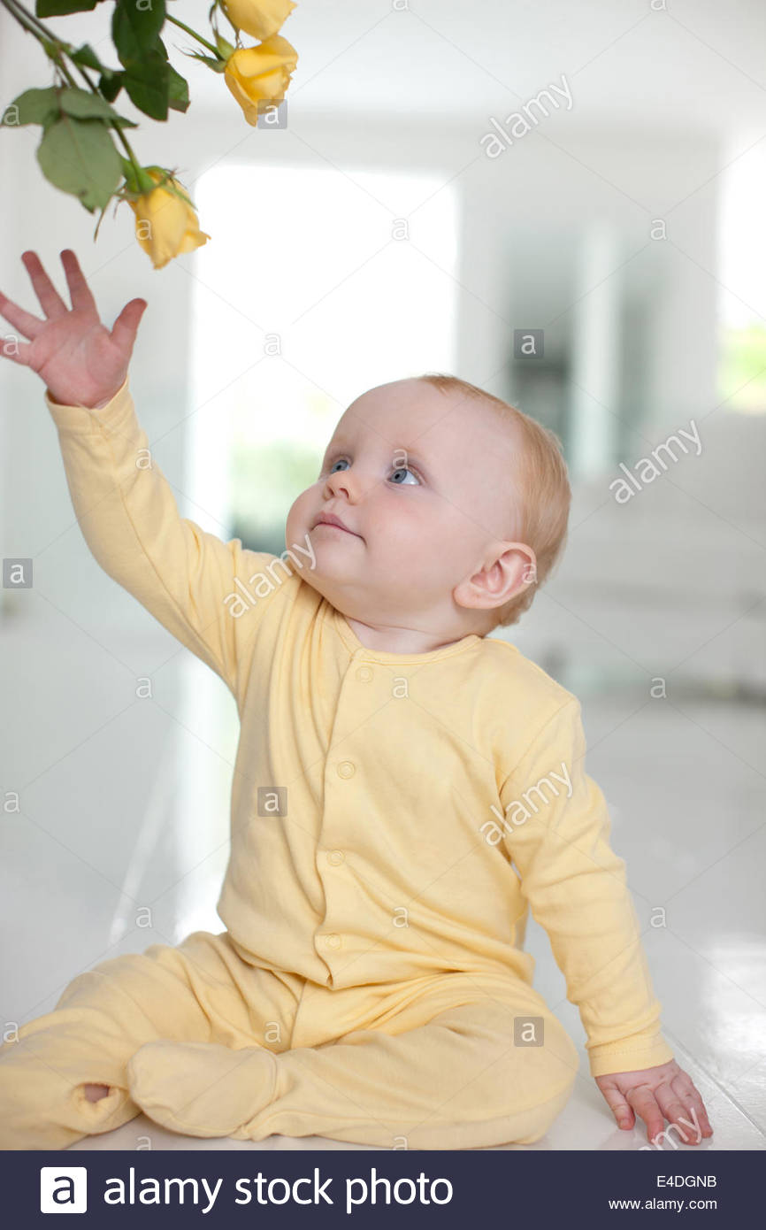 Baby reaching  for yellow flower - Stock Image