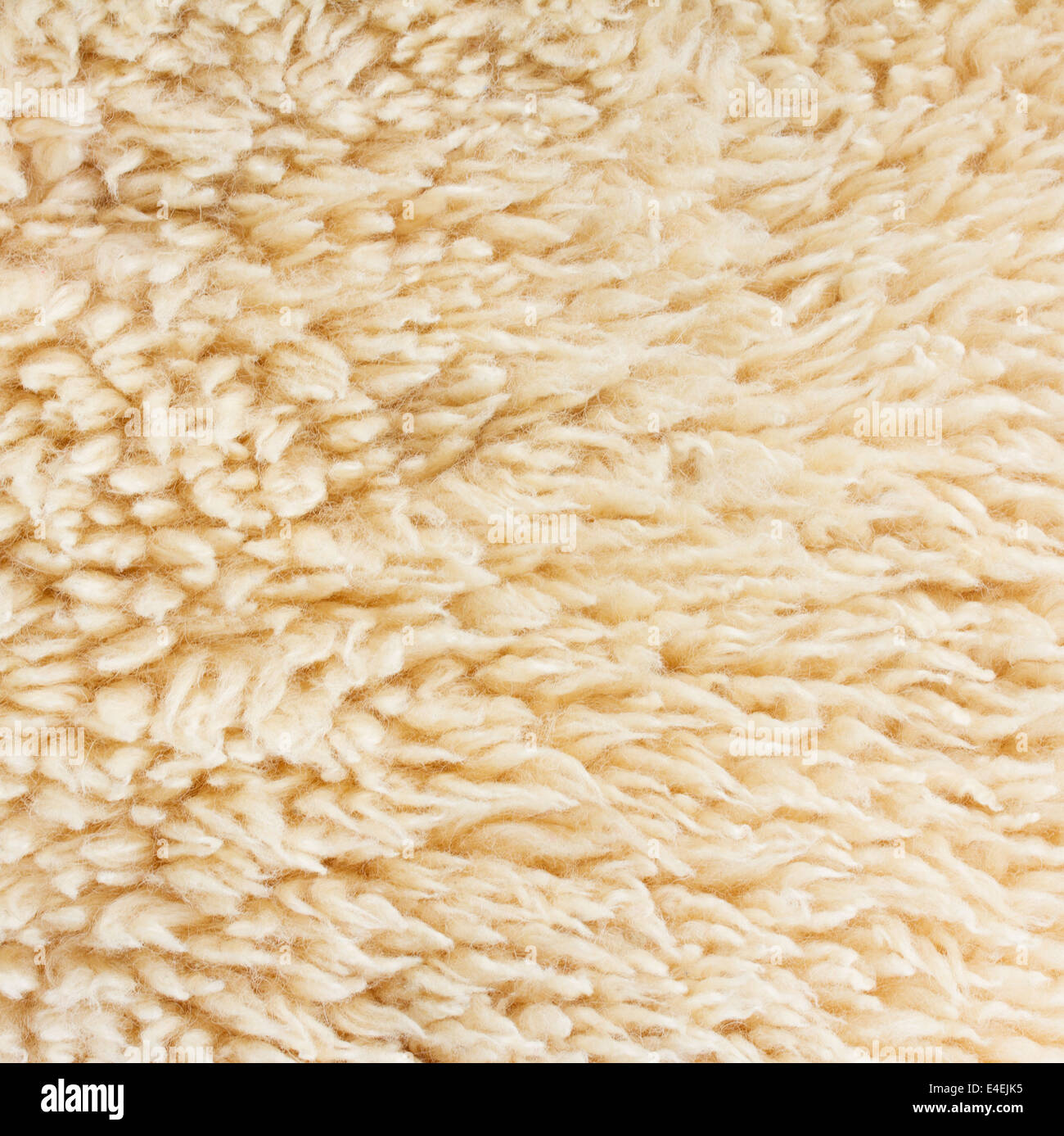 abstract sheep fur background - Stock Image