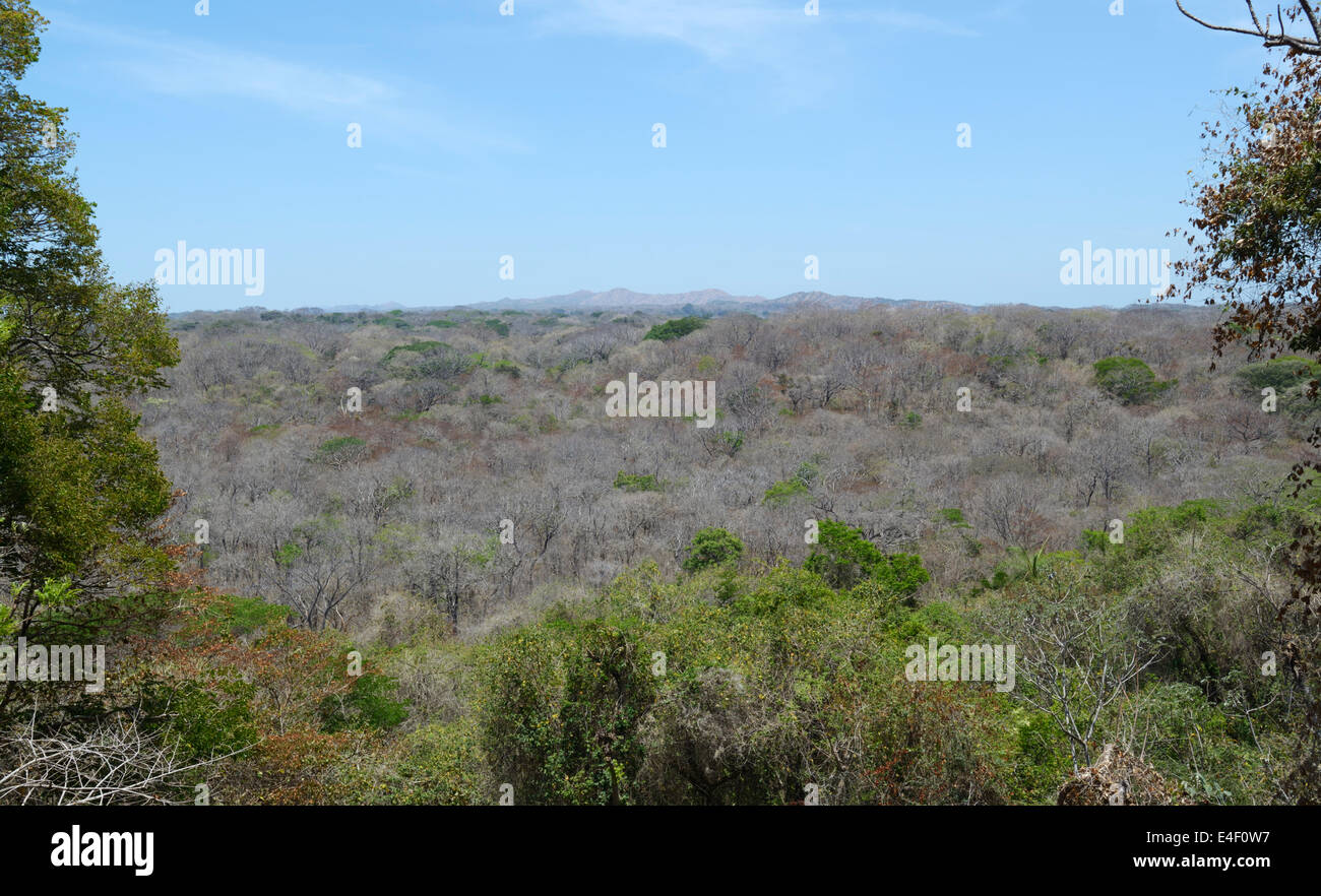 Tropical dry forest, Santa Rosa National Park, Guanacaste Province, CR, during the dry season (April) - Stock Image