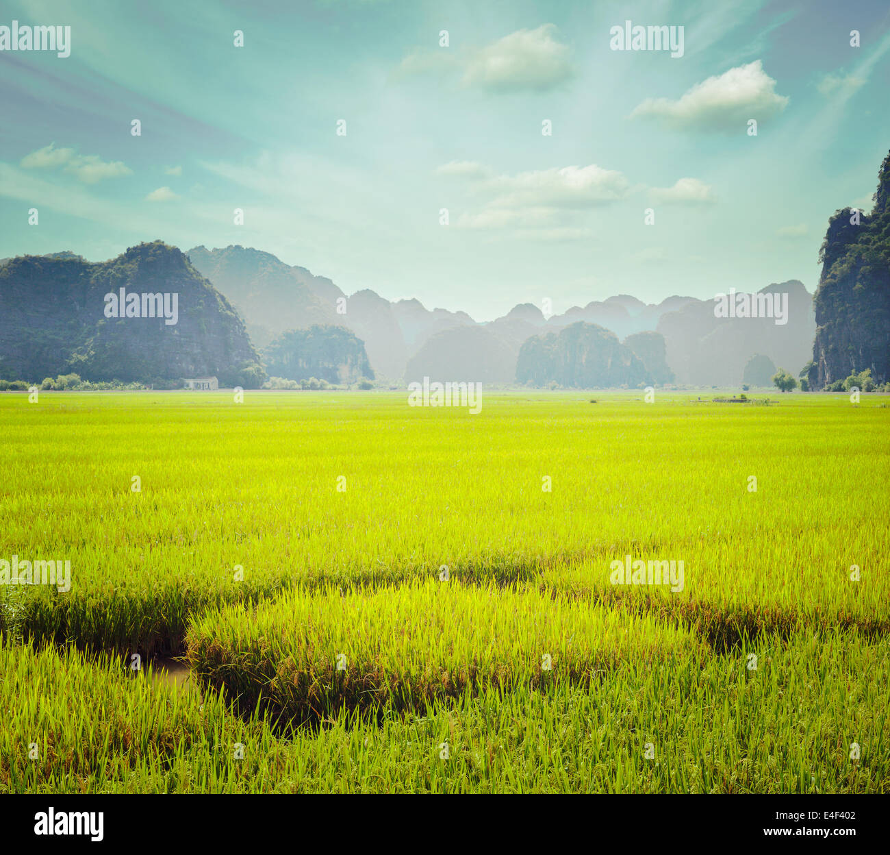 Vintage retro hipster style travel image of rice field. Tam Coc, Vietnam - Stock Image