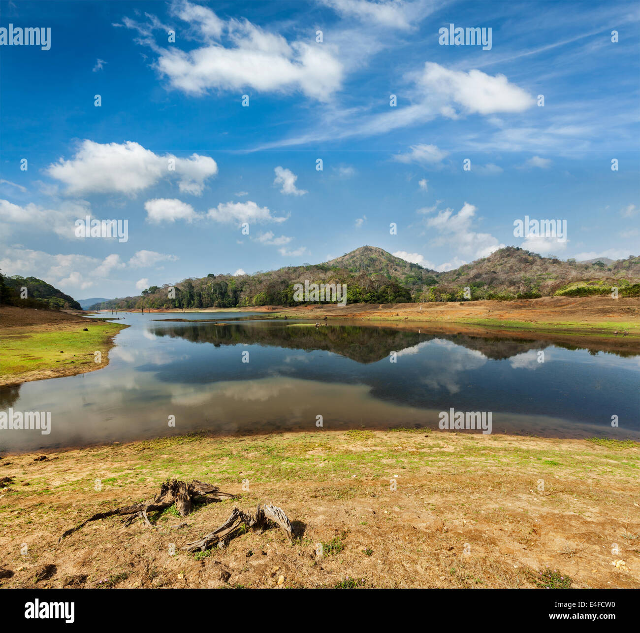 Periyar lake in Periyar wildlife sanctuary, Kumily, Kerala, India - Stock Image