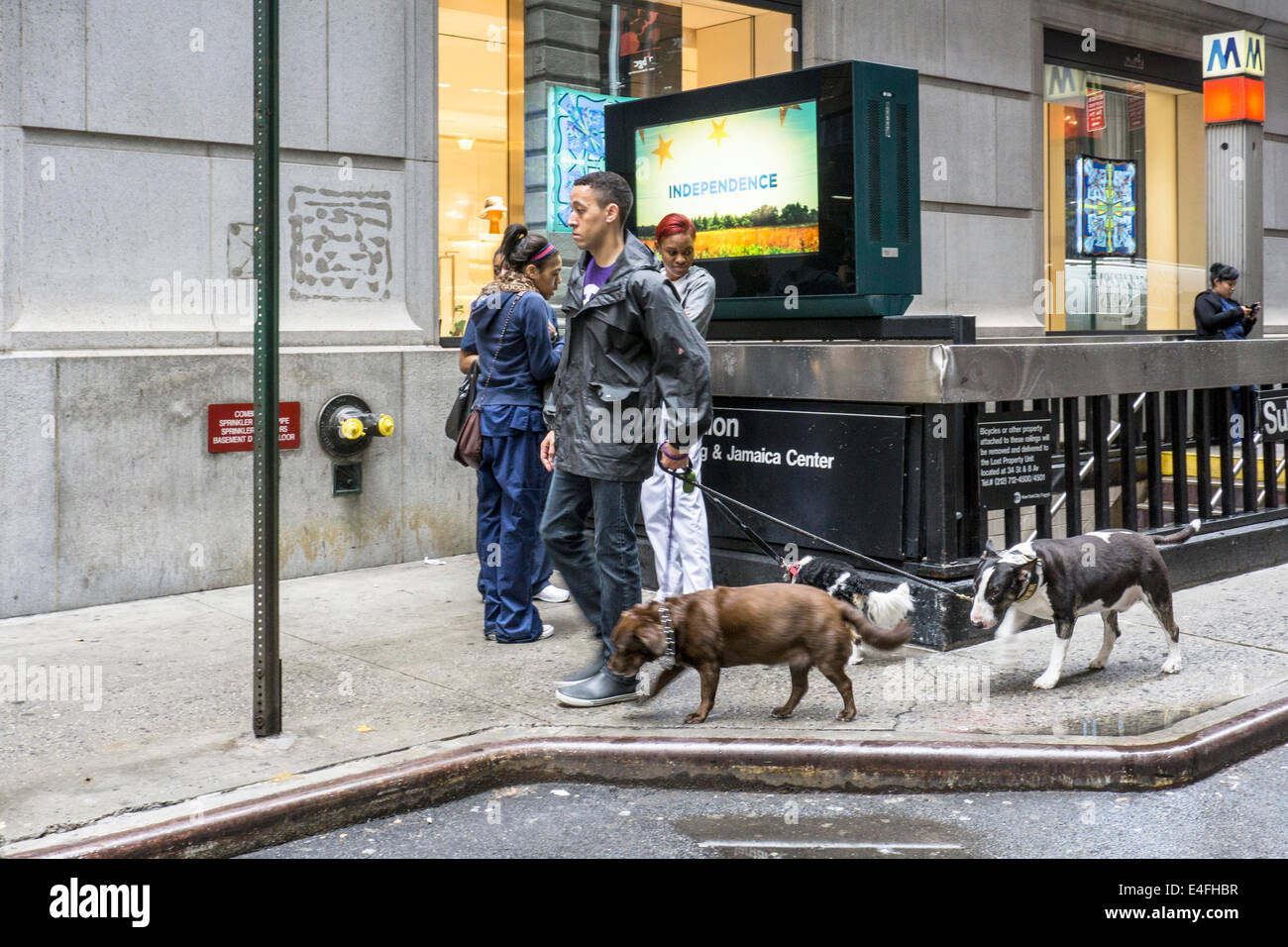 stoic professional dog walker leads 3 pricey dogs around subway entrance at corner Exchange Place & Broad street - Stock Image