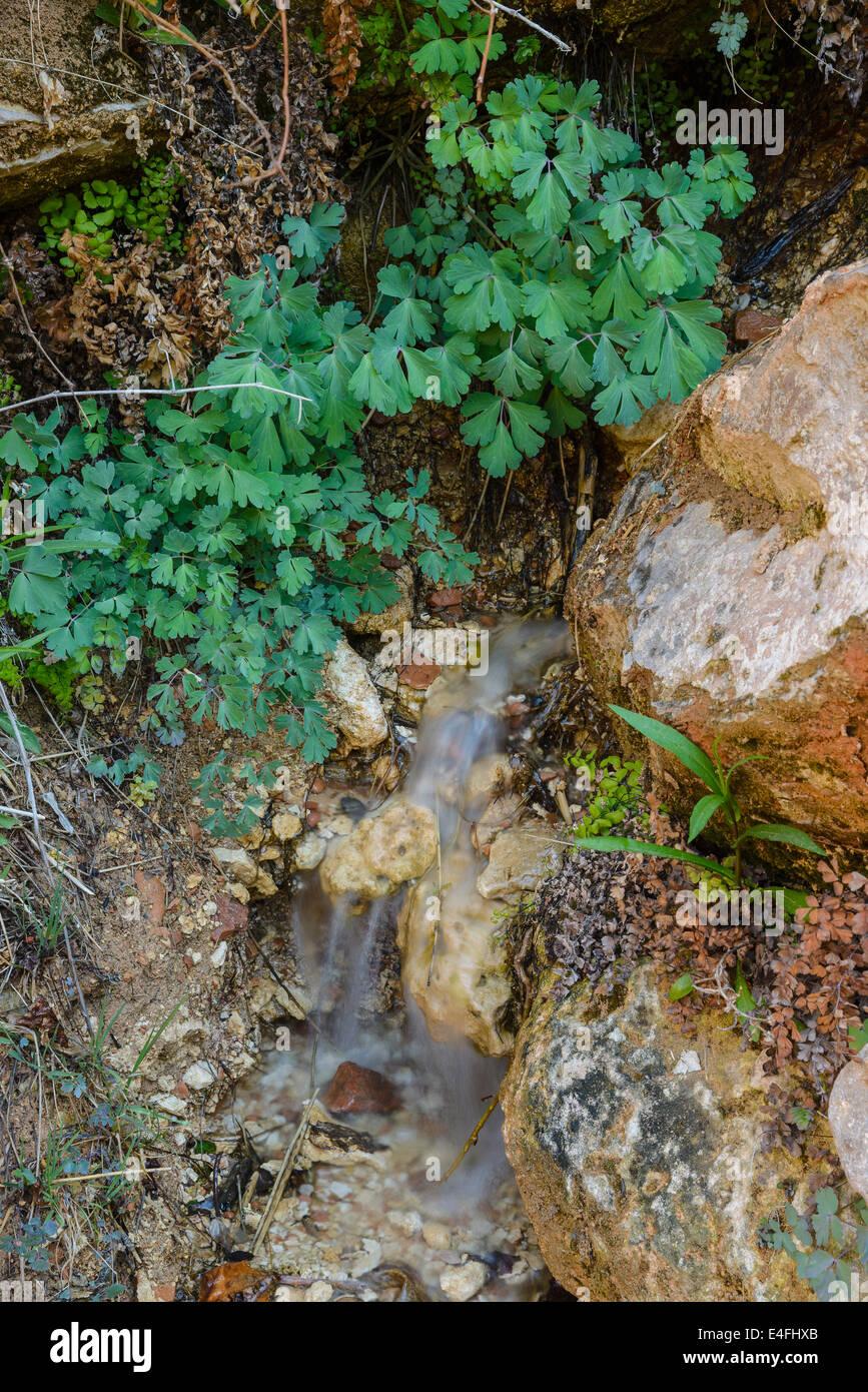 Hanging gardens of Weeping Rock, Zion National Park, Utah, USA - Stock Image
