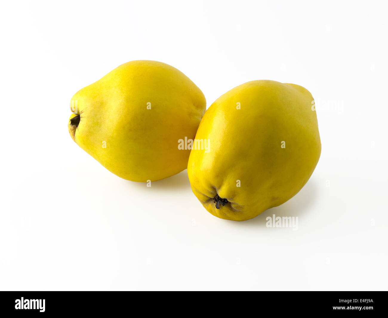 Quince - Stock Image