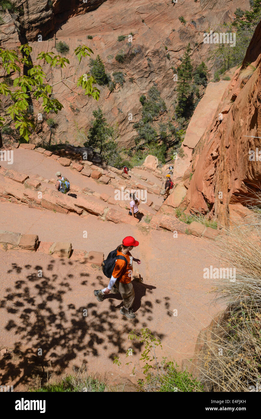 Walters Wiggles on the trail to Angels Landing, Zion National Park, Utah, USA Stock Photo