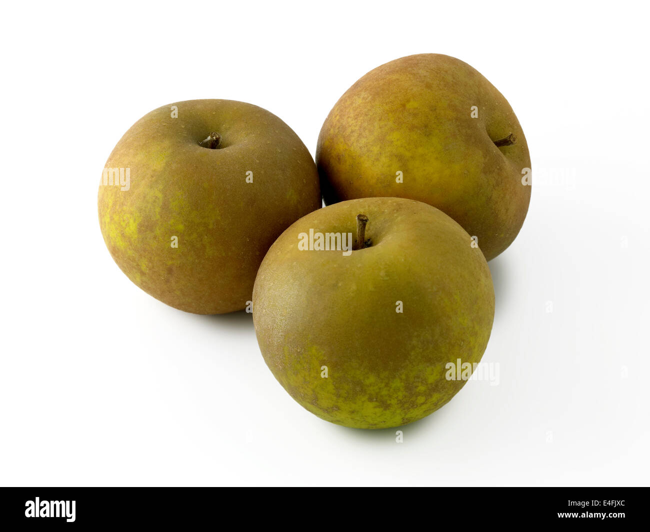 Egremont russet apple - Stock Image