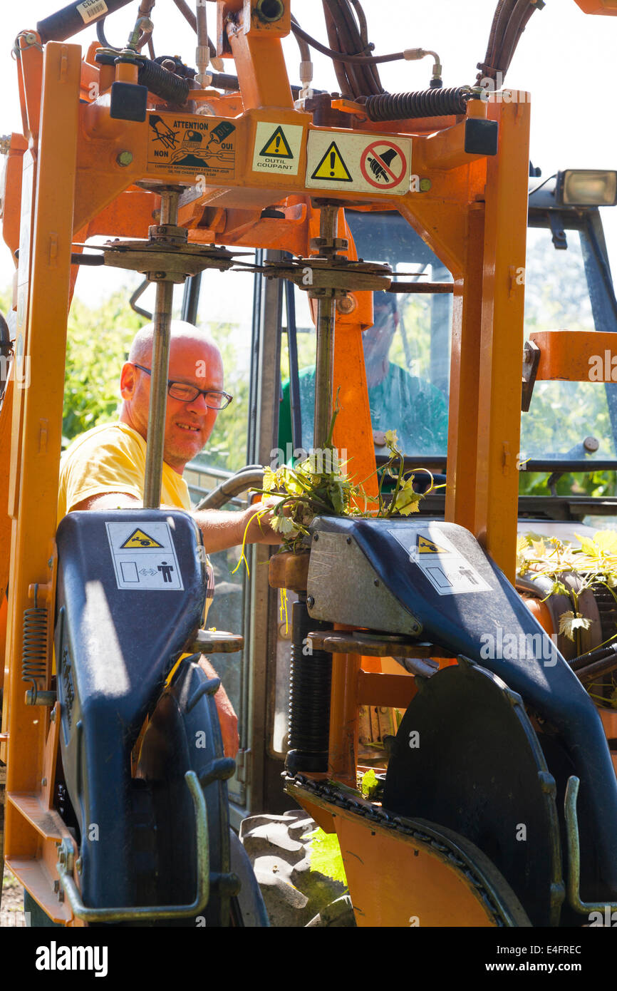 Man clearing vine branches from tractor branch raising mechanism. - Stock Image