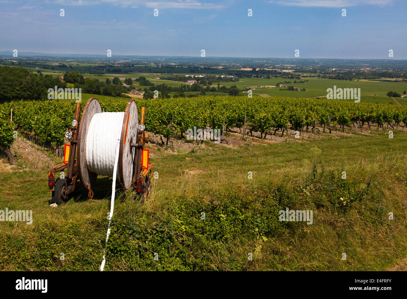 Water irrigation pipe on drum by rows of grape vines. - Stock Image