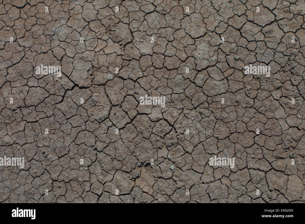 Dry cracked earth - Stock Image