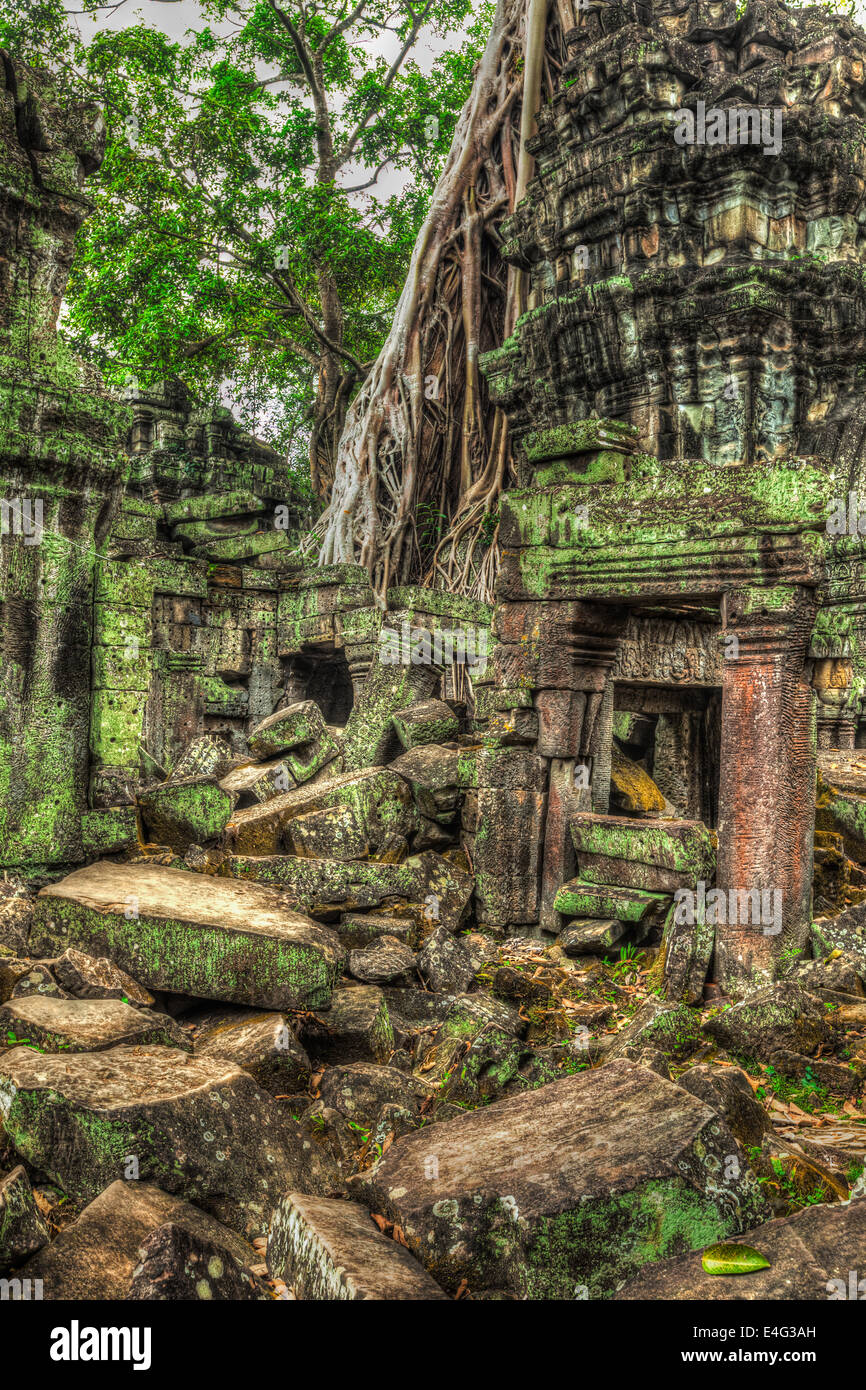 High dynamic range (hdr) image of  ancient ruins with trees, Ta Prohm temple, Angkor, Cambodia - Stock Image