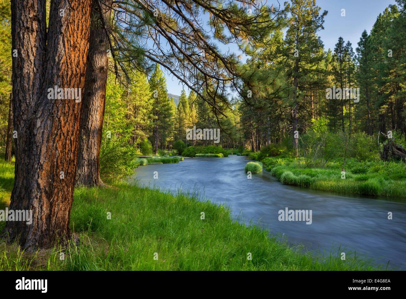 Metolius River, Deschutes National Forest, Central Oregon. - Stock Image