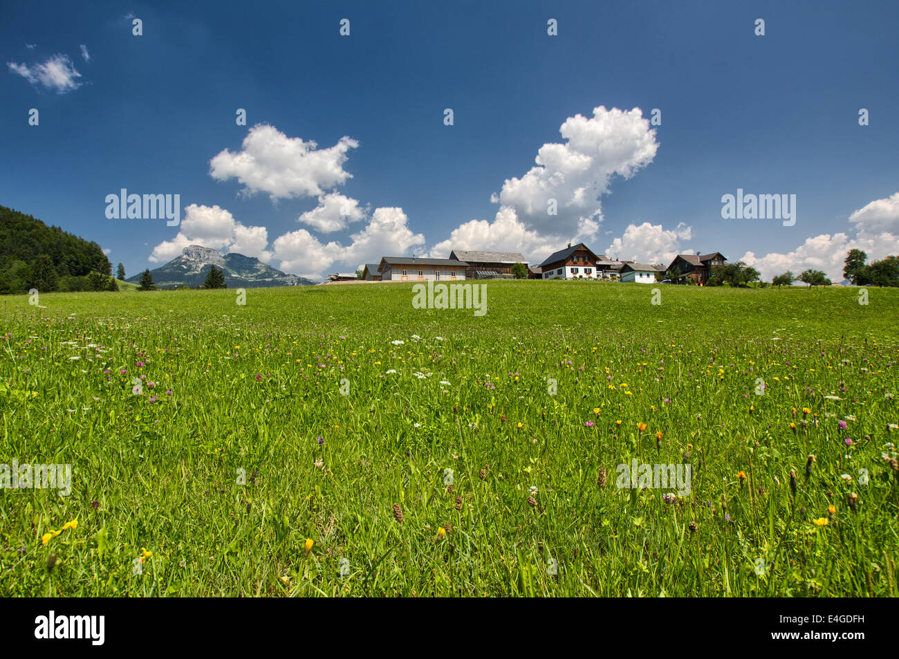 The houses in the meadow in high mountains panorama - Stock Image