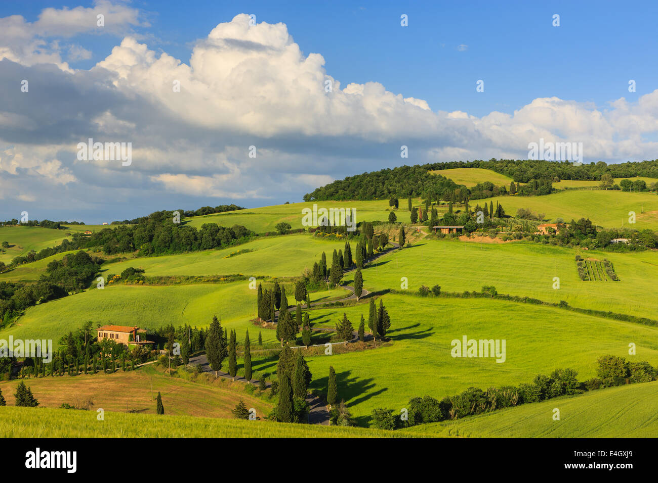 Winding road near Monticchiello with the famous Cypress trees in the heart of the Tuscany, Italy Stock Photo