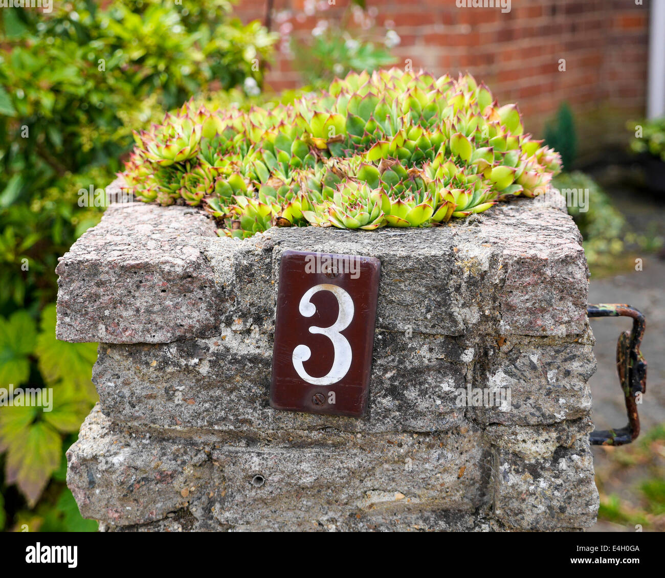 alpine plants in stone gate post and number 3 Twickenham, Greater London, UK - Stock Image