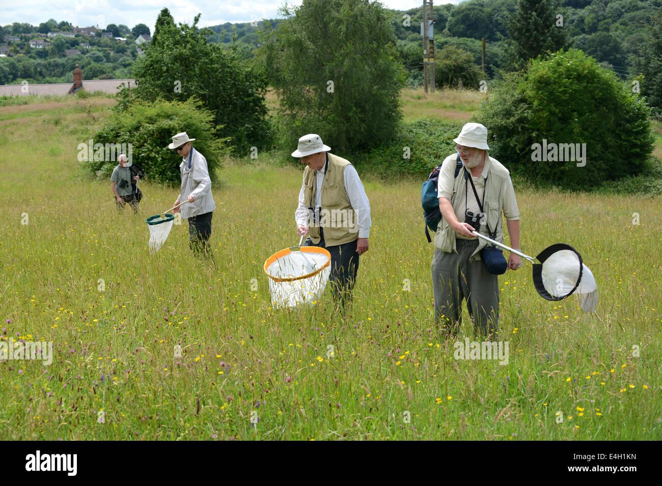Shropshire Invertebrate Group Entomologists sweep netting for Invertebrates survey of the Lodge Field - Stock Image