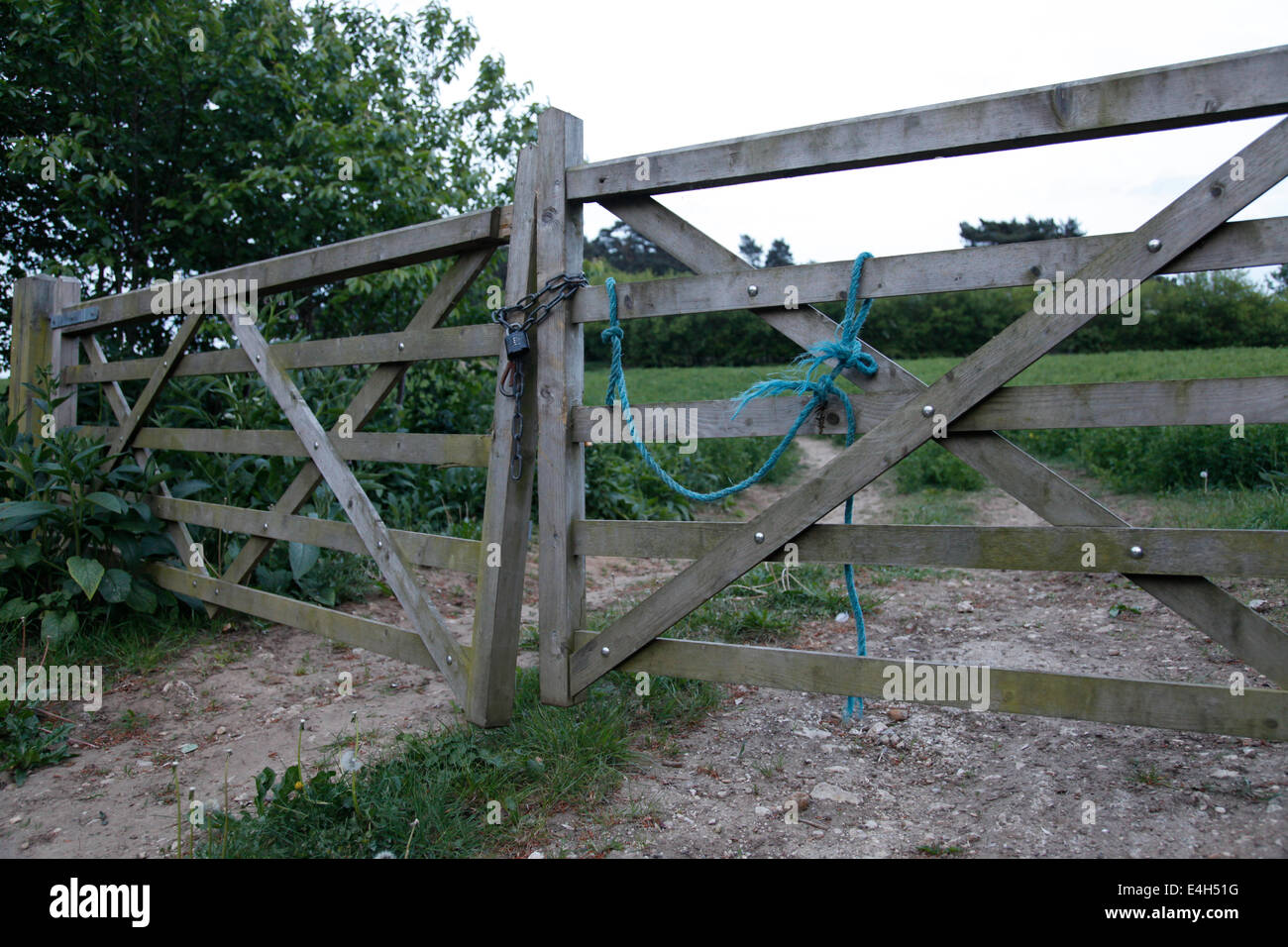 Padlocked gated access to a field, with a wood behind - Stock Image