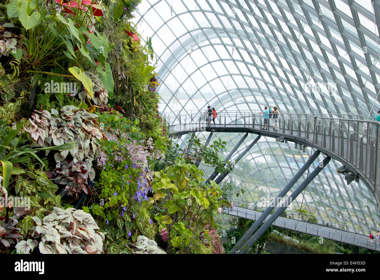 The Tree Top Walk In The Cloud Forest Dome Quot Gardens By The
