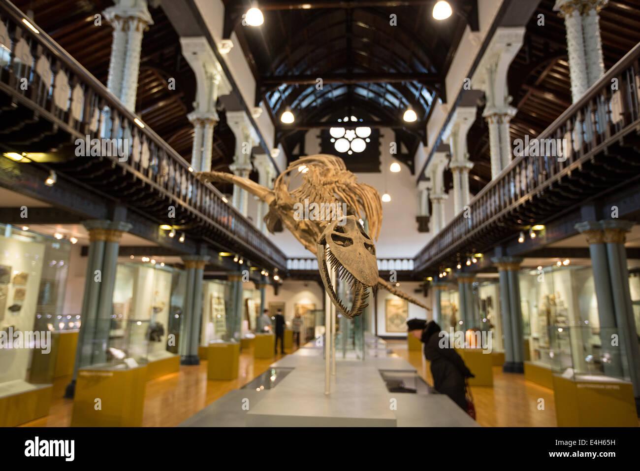 Hunterian Museum, University of Glasgow, Glasgow, Scotland. - Stock Image