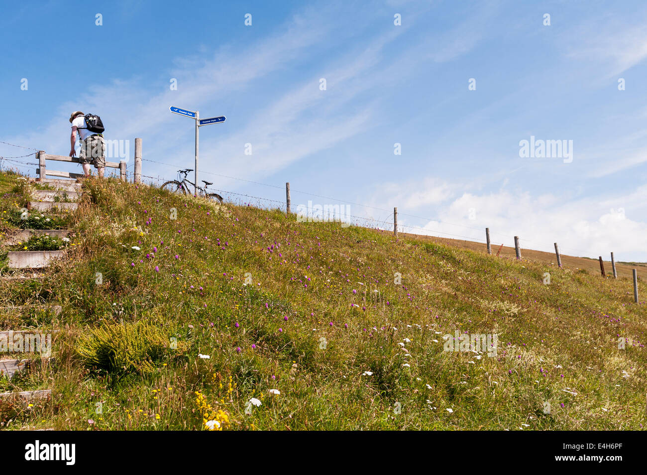 walker hiker ramblers climbing steps on the coastal path at Afton down leading to freshwater on the isle of wight - Stock Image