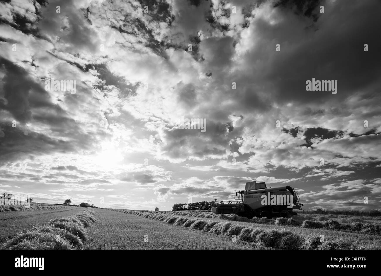 Combine harvester at work in a Norfolk barley field, UK Stock Photo