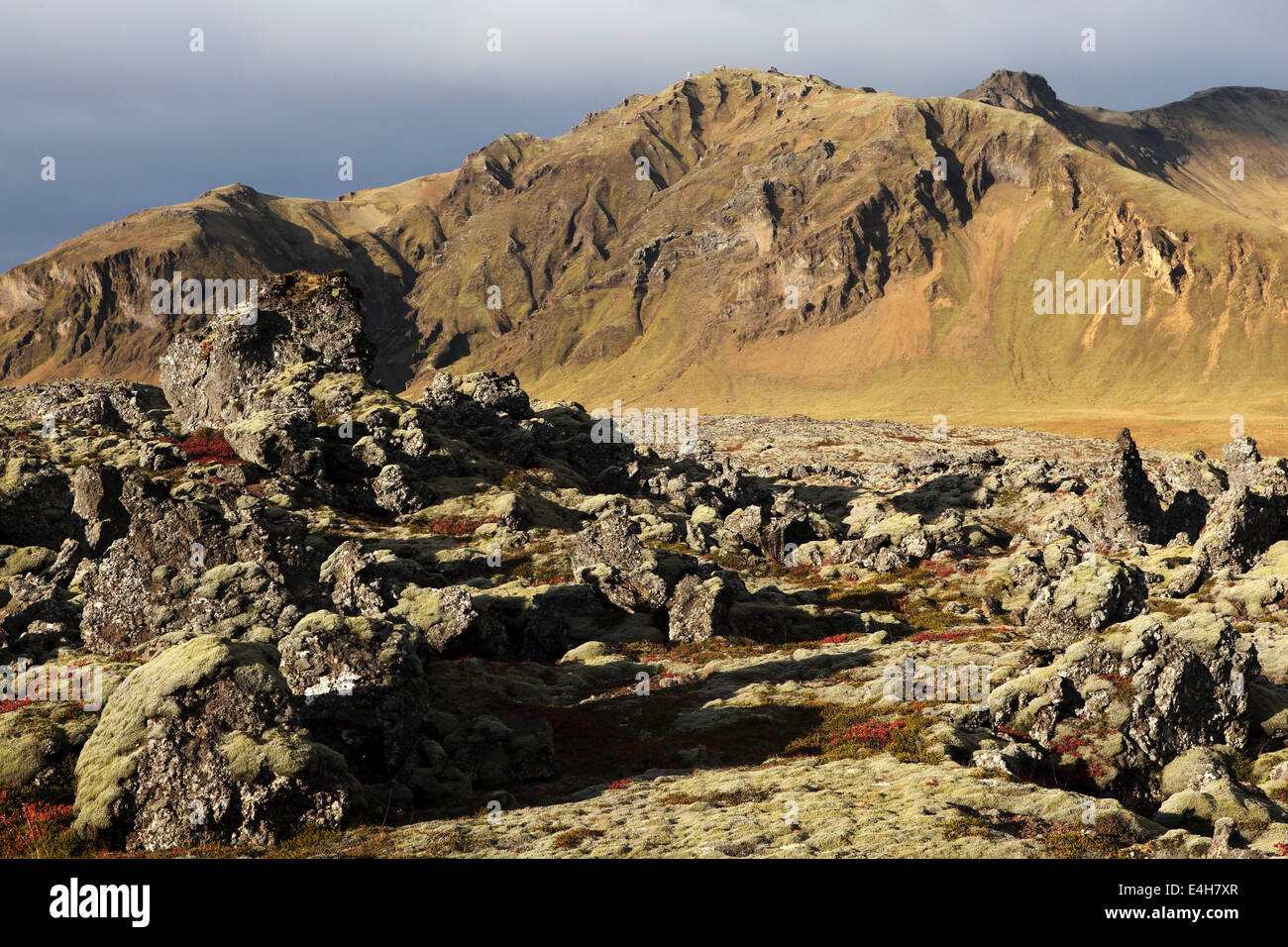 Lava field at the Beserkjaravn near Bjarnahofn, Iceland. - Stock Image